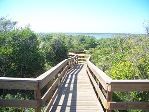 CNS Turtle Mound boardwalk06