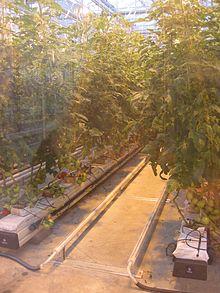 Hydrocultuur  Wikipedia