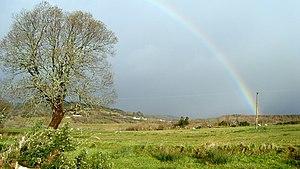 English: Tree in Ballydevitt Enjoys brief resp...