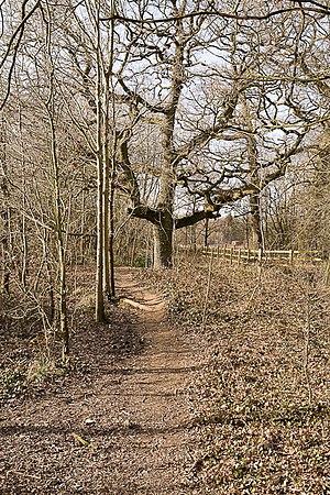 English: Woodland path I thought I was on a pu...