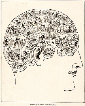 English: Phrenology diagram. From People's Cyc...