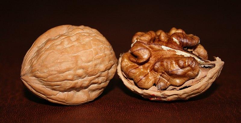 File:Two English Walnuts.jpg