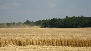 English: A combine harvesting wheat. Photo tak...