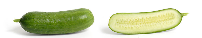 File:Cucumber and cross section.jpg