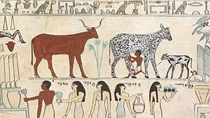 Old Egyptian hieroglyphic painting showing an ...