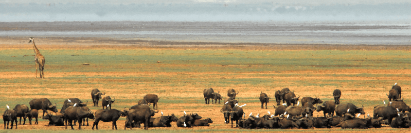 Datei:Lake manyara 2012 authorBevanda Wegmann4.png