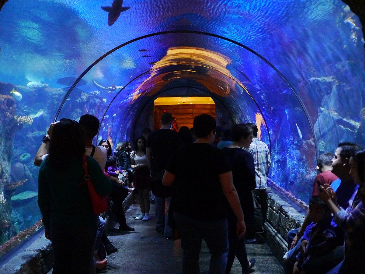Aquarium Mandalay Bay