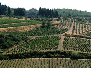 Vineyards in Gaiole in Chianti in the Chianti ...