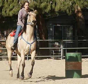 A Buttermilk Buckskin Horse. Photo by Ron Mill...