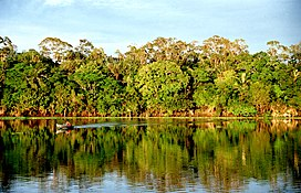 The temperate rainforests of south america evolved in isolation from those of north america and are characterized by broadleaf trees, especially members of. Amazon Rainforest Wikipedia