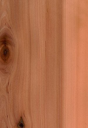 Wood surface, showing several features