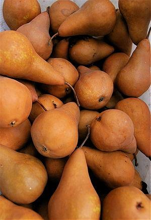 Bosc Pears, from Portland Farmers Market
