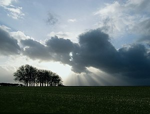 English: Clump of trees with sun rays below th...