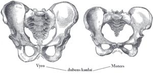 Male vs female pelvis LT