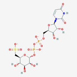 Uridine-diphosphate-sulfoquinovose — Wikipédia