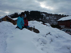 Children playing in snow 1