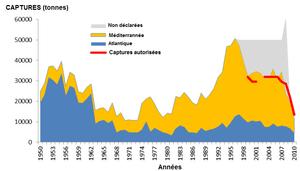 bluefin tuna catches since 1950 (Thunnus thynnus)