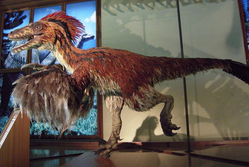 File:Deinonychus im NHM Wien.JPG