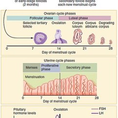 Menstrual Cycle Diagram With Ovulation Plot For The Treasure Of Lemon Brown Wikipedia