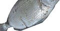 Spottail Pinfish fishing.jpg