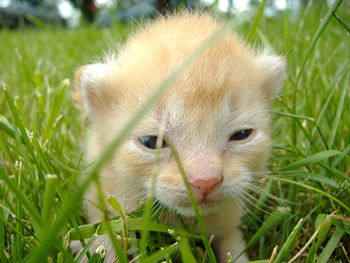A kitten opens its eyes for the first time