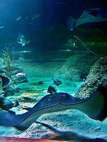 Aquarium of Western Australia  Wikipedia