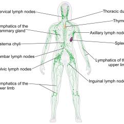 Heart Diagram Nodes Cool Venn Lymphatic System Wikipedia