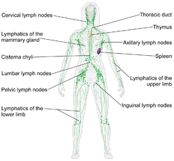 where are my lymph nodes diagram how to wire a single pole switch lymphatic system wikipedia