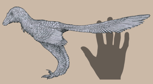 Life restoration of Caihong juji, with colors