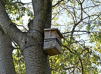A nest box in Jardin des Plantes, Paris.