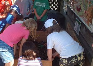 English: Students learning about vermicomposting