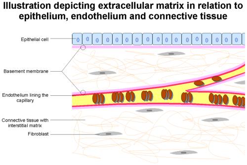 small resolution of ecm biology