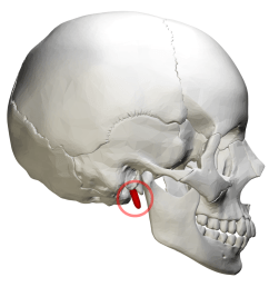 tounge diagram label [ 1200 x 1200 Pixel ]
