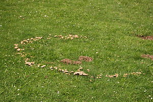 Hexenringe, fairy ring,fairy circle