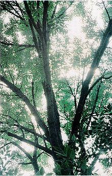 Annarbor tree.jpg