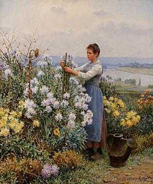 chrysanthemums, haiku, carpe diem challenge, autumn,