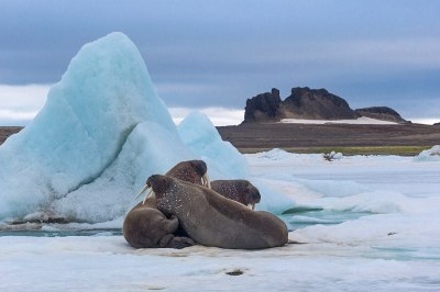 Franz Josef Land – Travel guide at Wikivoyage
