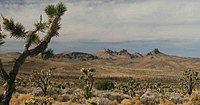 Castle Mountains e Joshua Trees.jpg