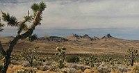कैसल पर्वत और यहोशू पेड़। Jpg