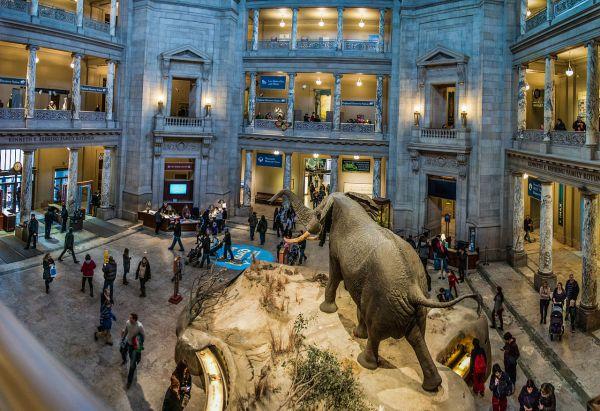 Smithsonian Natural History Museum Washington DC