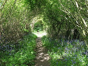 Wooded path north of Madgeland Farm