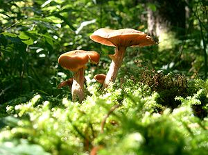 Land-based plants and fungi have been part of ...