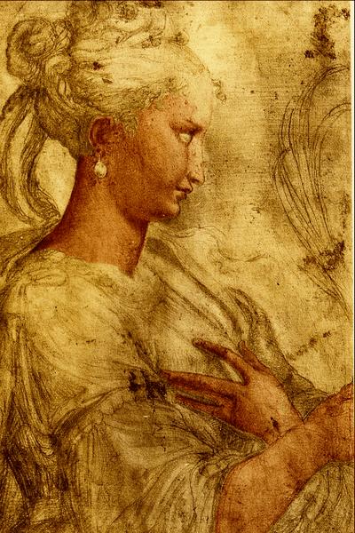 File:Profilo di Donna - Parmigianino.png