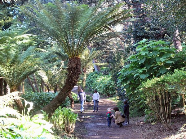 File Tree Ferns Golden Gate Park San - Wikimedia Commons