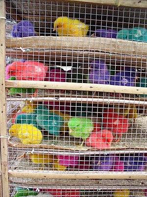 Pollitos pintados  Wikipedia la enciclopedia libre