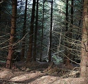 English: Llandegla Forest Llandegla Forest is ...