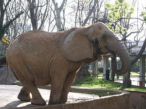 Elefante,Zoo Barcelona,España.