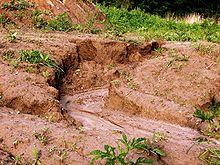 Landnutzung in den Tropen  Wikipedia