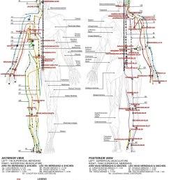 grain leg diagram [ 1200 x 1611 Pixel ]