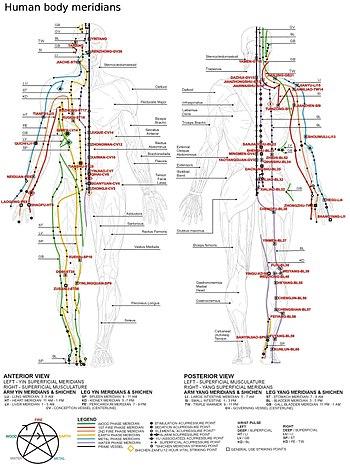 Localisation Des Points D Acupuncture : localisation, points, acupuncture, Méridien, Médecine, Traditionnelle, Chinoise, Wikipédia
